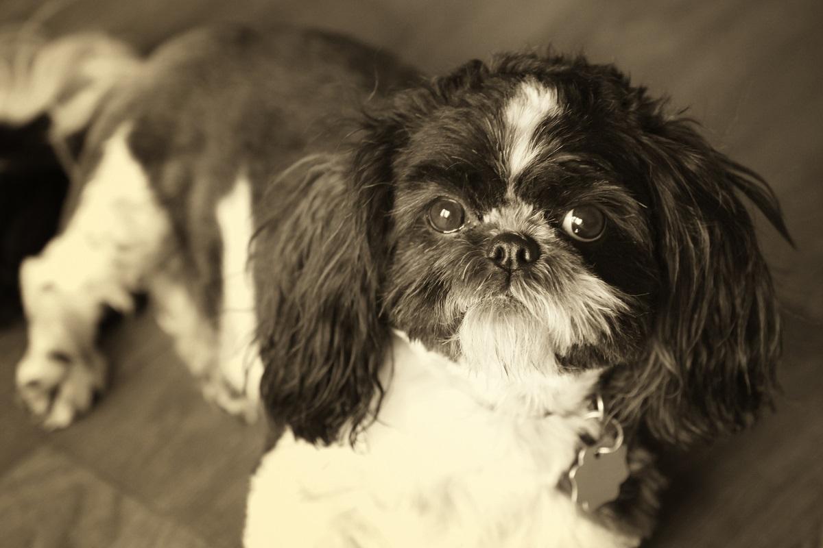 extrem robuster rasen für hunde
