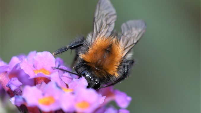 Galerie Makroaufnahmen Insekten