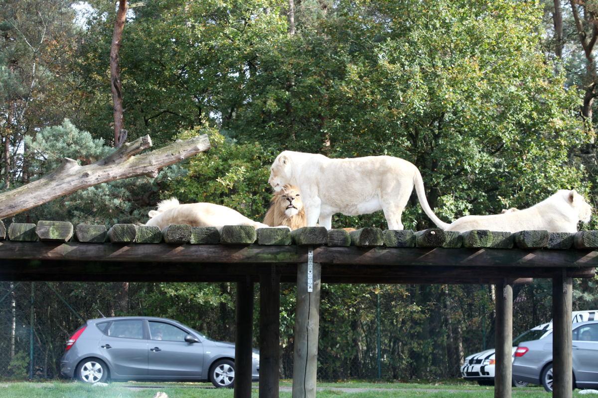 Zoo Safaripark Schloß Holte-Stukenbrock